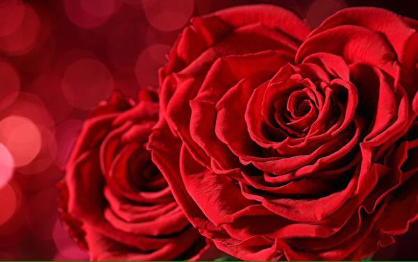 Gedicht Verliebte Herzen Von Ramona Benouadah Bei E Stories De